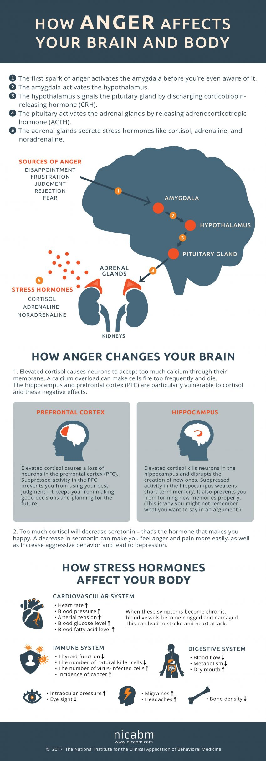 how-anger-affects-the-brain-and-body-infographic